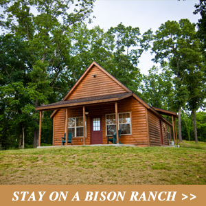 Stay on a Bison Ranch