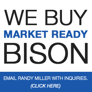 We Buy Market Ready Bison